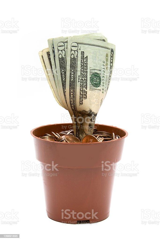Money Plant royalty-free stock photo