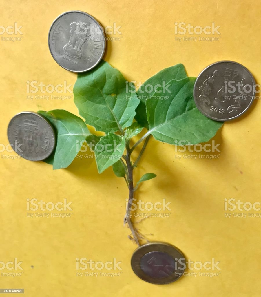 Money plant stock photo