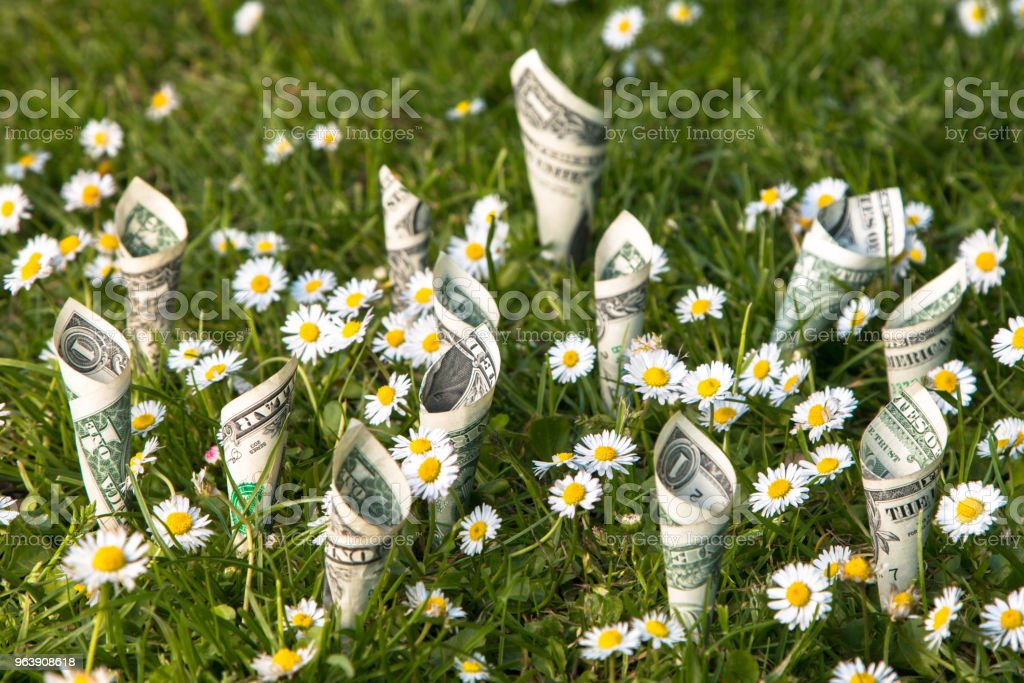 Money plant. US dollar bills planted with chamomile/daisy on green grass background.. - Royalty-free American One Dollar Bill Stock Photo