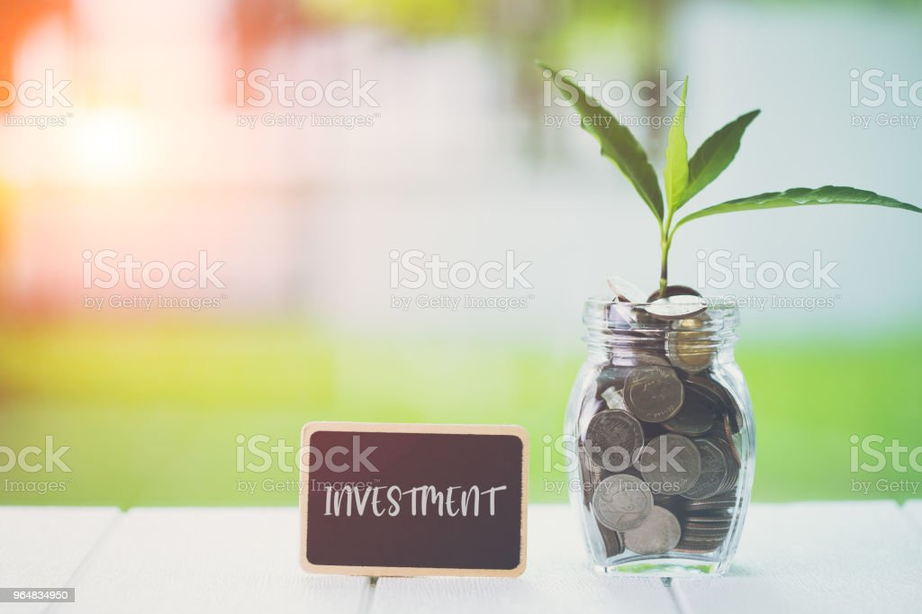Money saving and investment financial concept. Plant growing in savings coins with text investment on small billboard on wooden table. Copy space for your text. Tax, Vat, Stock, Salary royalty-free stock photo