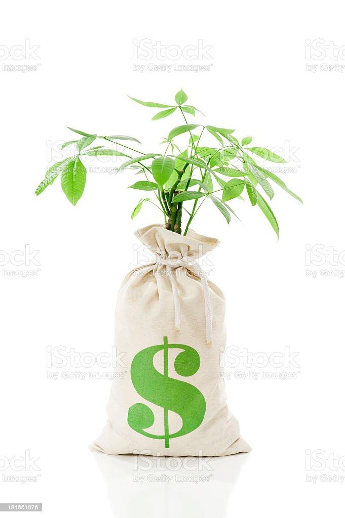 Money Tree - Dollar Moneybag royalty-free stock photo