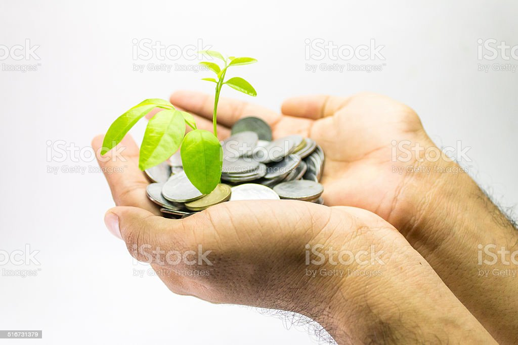 Money tree growing from a pile of coins in hands stock photo