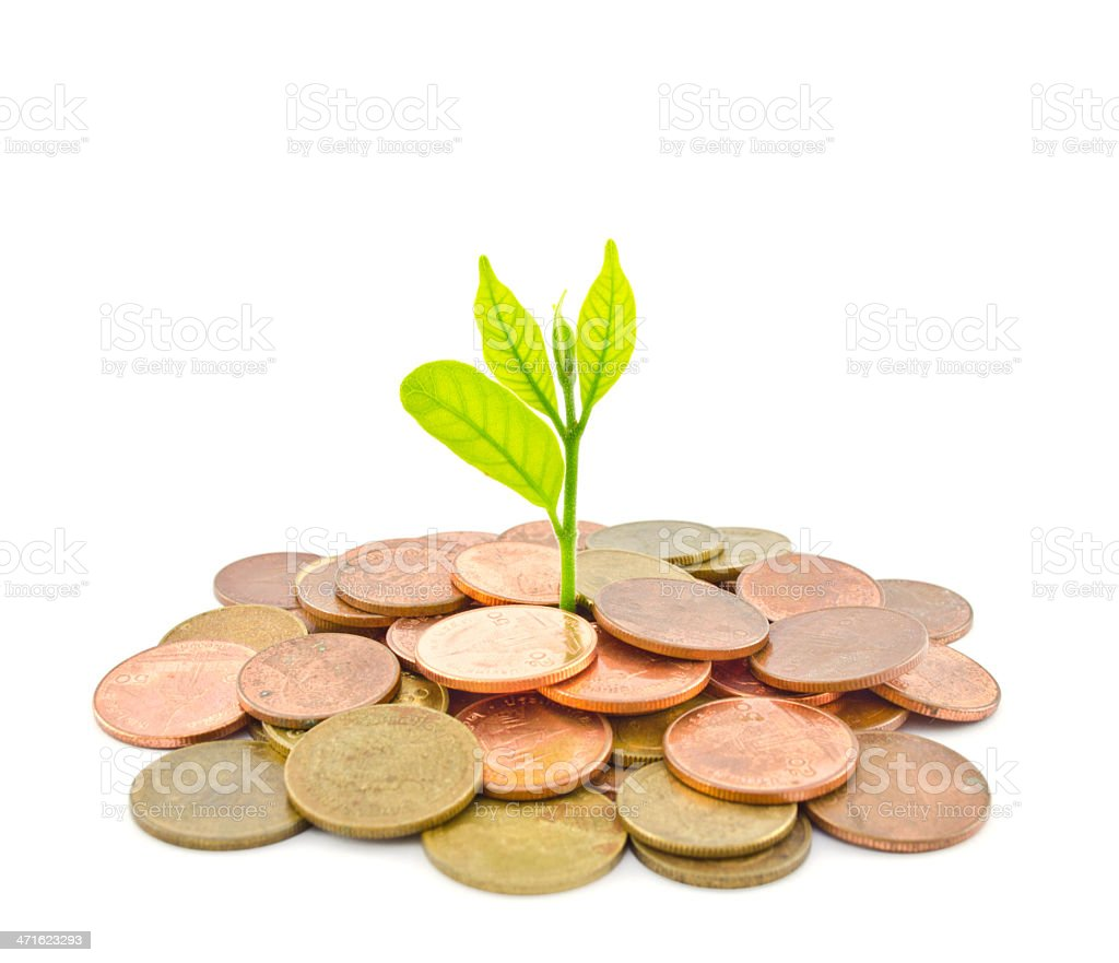 Money Tree growing from a pile of coins. stock photo