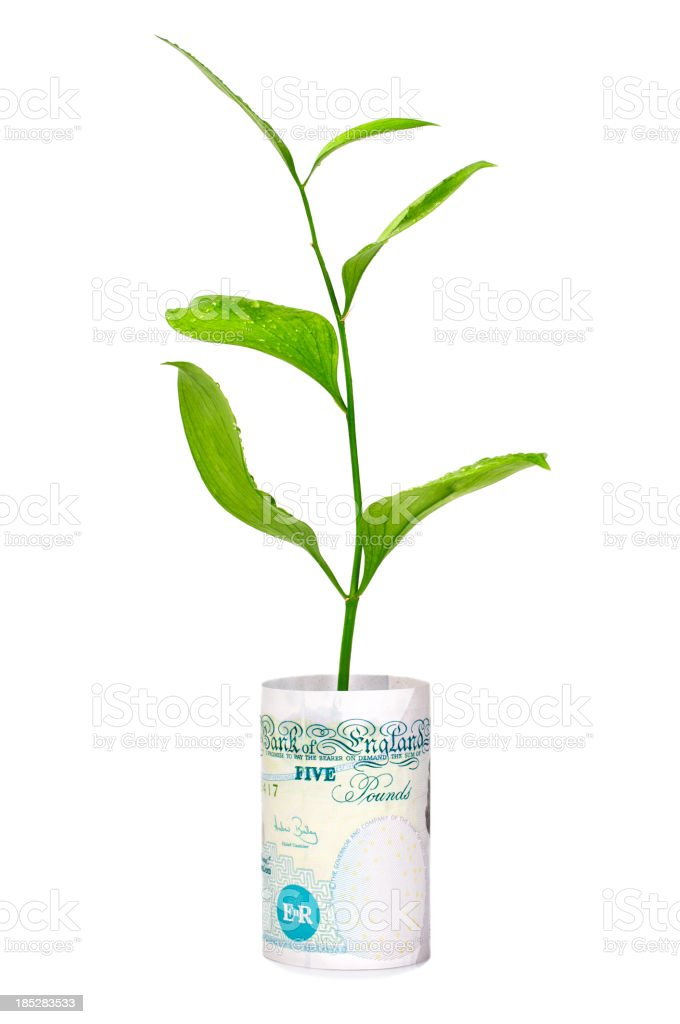 Money tree in bucket of British Pounds royalty-free stock photo