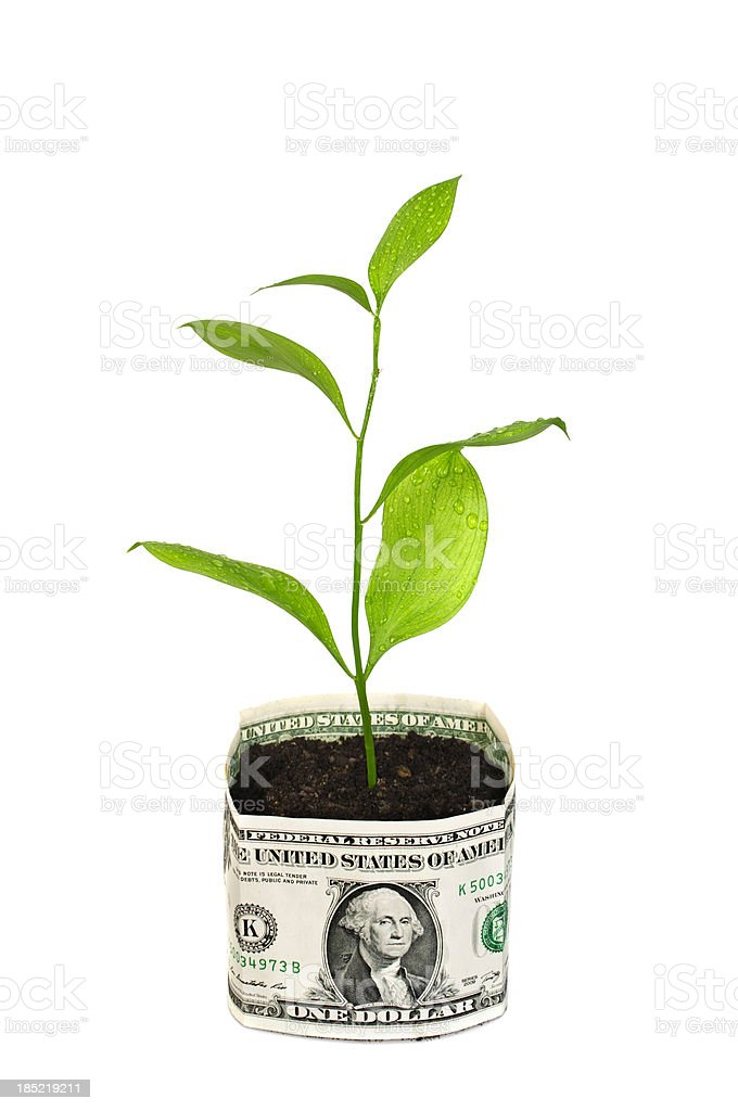 Money tree in bucket of Dollars royalty-free stock photo