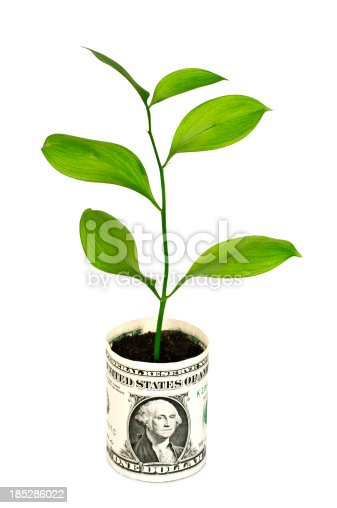 Money tree growing out of a bucket with a Dollar isolated on white