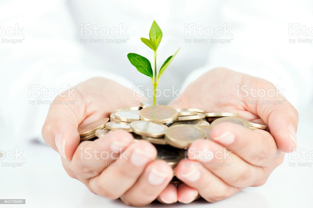 Money Tree in Hand stock photo