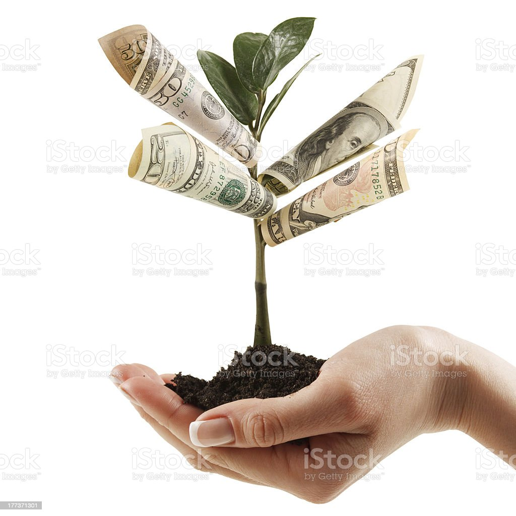 Money Tree on his hand of women. stock photo