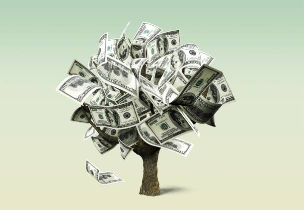 Money tree. Money Tree with dollars business concept money tree stock pictures, royalty-free photos & images