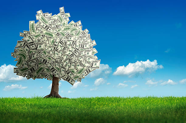money tree digitally generated image of money tree over clear sky.  money tree stock pictures, royalty-free photos & images