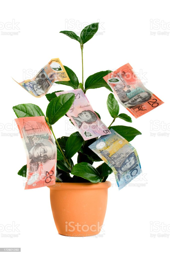Money Tree royalty-free stock photo