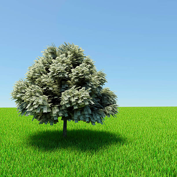 Money tree Money tree growing in the middle of green meadow. money tree stock pictures, royalty-free photos & images