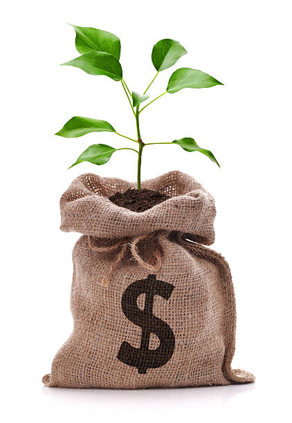 Money tree Money bag with dollar sign and money tree growing out the top isolated on white money tree stock pictures, royalty-free photos & images