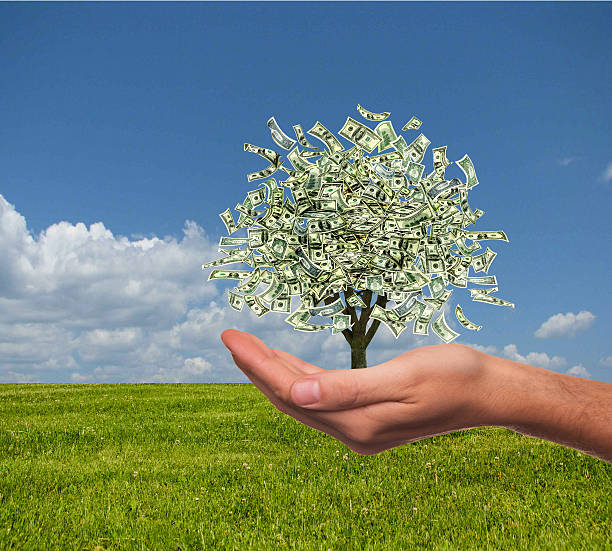 Best Money Tree Stock Photos, Pictures & Royalty-Free ...