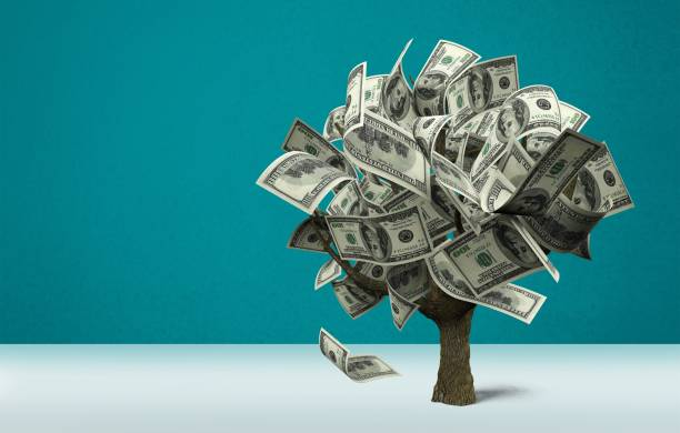 Money tree. Money Tree with dollars on background money tree stock pictures, royalty-free photos & images