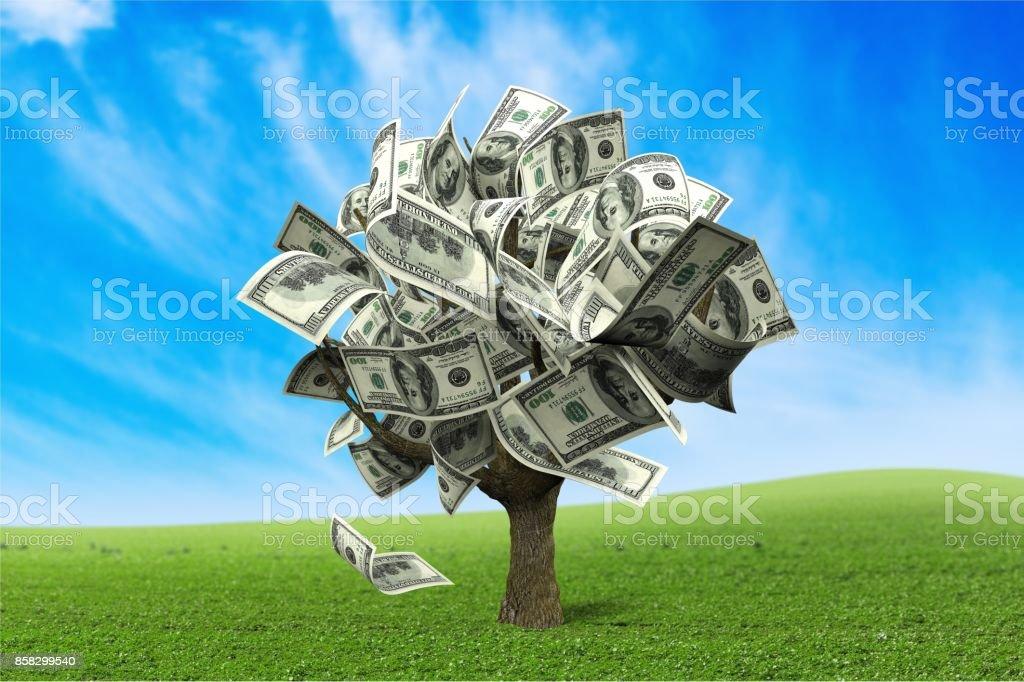 Money tree. stock photo