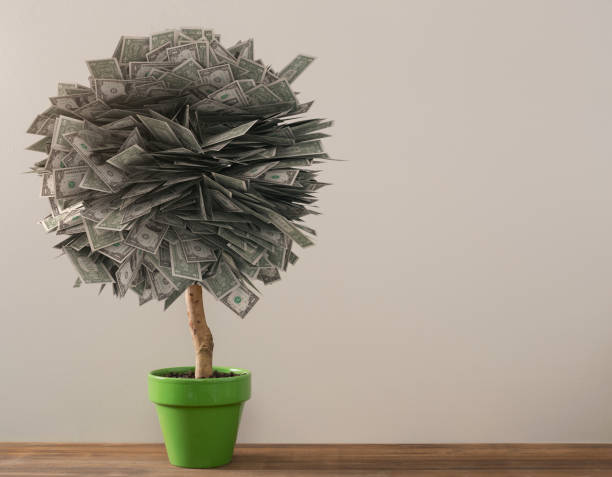 Money Tree Wealth and Retirement Savings Concept Money tree wealth and retirement concept with copy space pachira aquatica stock pictures, royalty-free photos & images