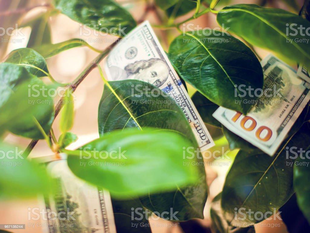 Árbol de dinero con billetes de un dólar en hojas - foto de stock