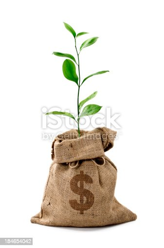 Money Tree growing out of a Money Bag with a Dollar isolated on white
