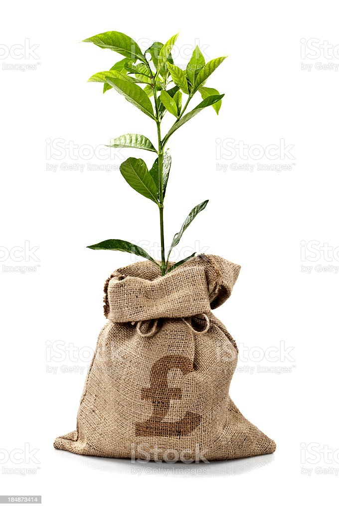 Money Tree/Money Bag With Pounds royalty-free stock photo