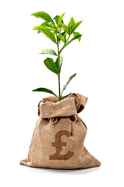 money tree/money bag with pounds - pound sterling isolated bildbanksfoton och bilder