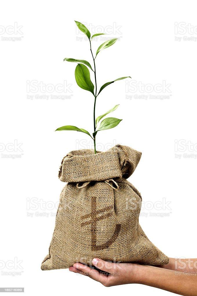 Money Tree/Money Bag With Turkish Lira in Human Hand stock photo