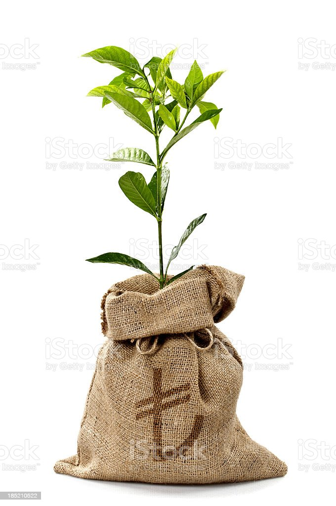 Money Tree/Money Bag With Turkish Lira royalty-free stock photo