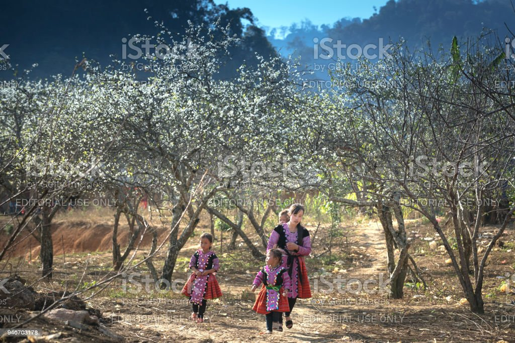 H'Mong ethnic minority children in the most beautiful clothes playing together to welcome H'Mong Lunar New Year stock photo