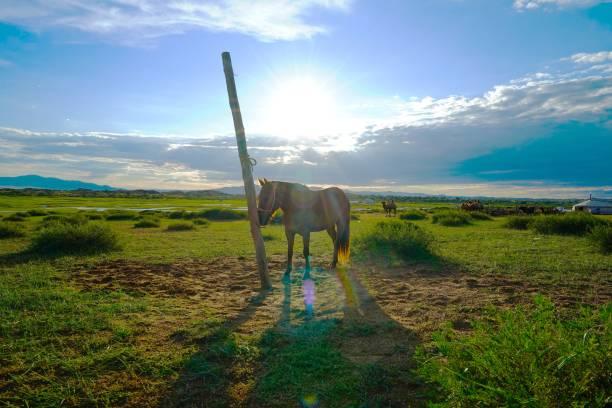 mongolei - ein riesiges offenes land - pferdezeitschrift stock-fotos und bilder