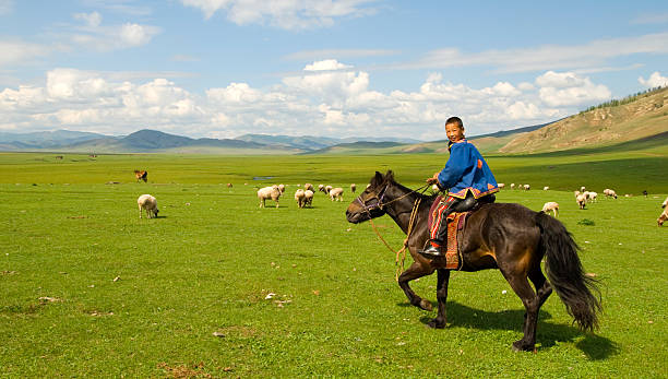 Mongolia Mongolian boy herding his flock of sheep/goats. mongolian culture stock pictures, royalty-free photos & images