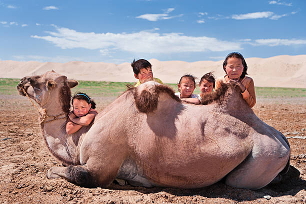 Mongolian children with camel stock photo