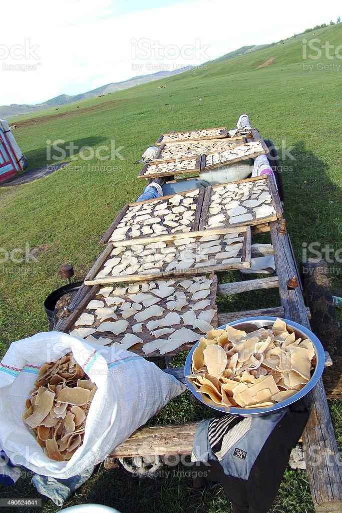 Mongolian dried cheese stock photo