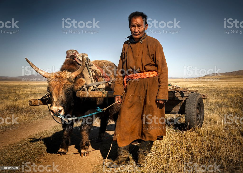 Mongolian Farmer with Bull and Cart stock photo