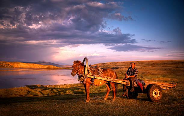 mongolische farmer mit pferd und golfwagen - rawpixel stock-fotos und bilder