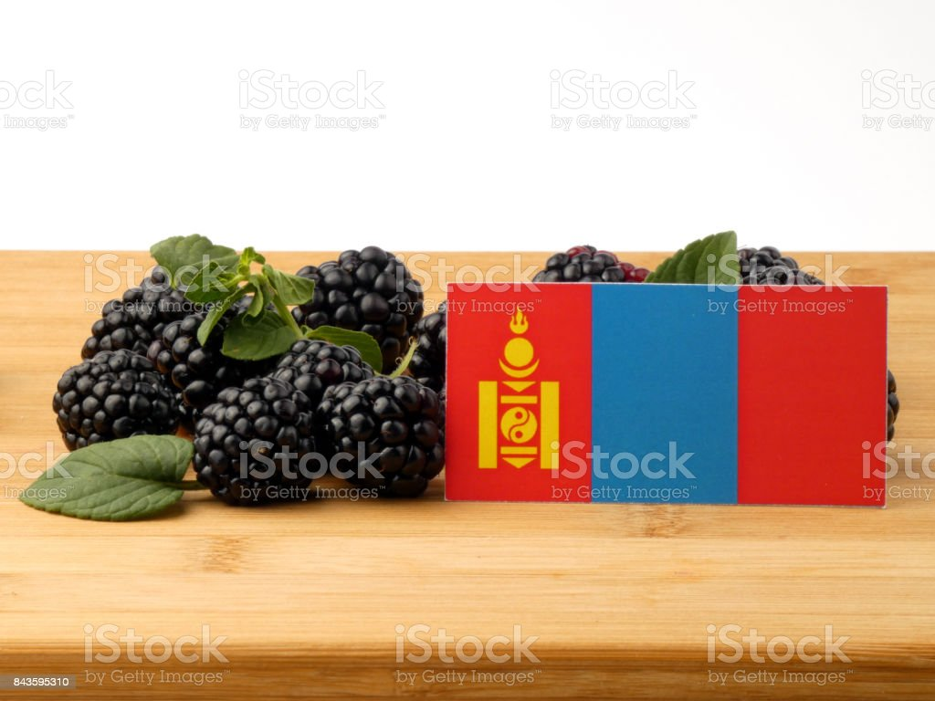 Mongolian flag on a wooden panel with blackberries isolated on a white background stock photo