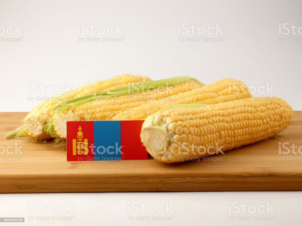 Mongolian flag on a wooden panel with corn isolated on a white background stock photo