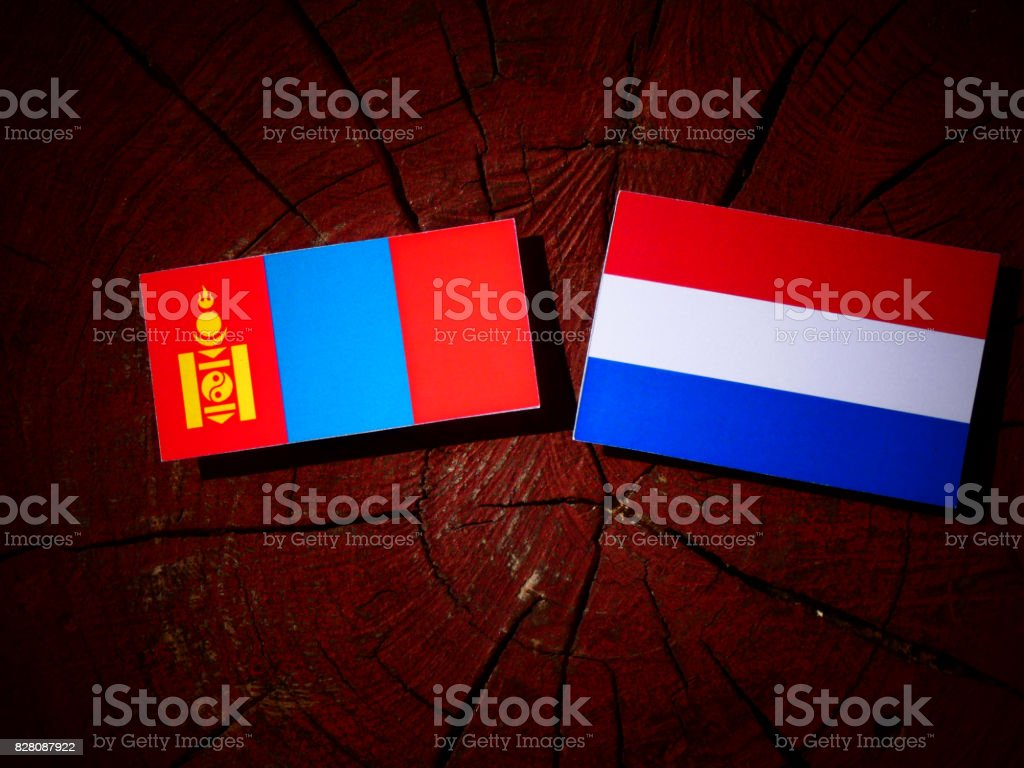Mongolian flag with Dutch flag on a tree stump isolated stock photo