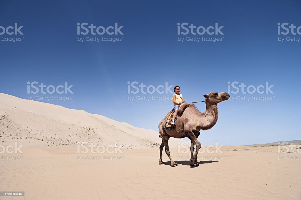 Mongolian girl riding on the camel stock photo