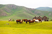 Herd of Mongolian horses in the Orkhlon Valley.