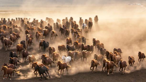 Mongolian horses picture id820266480?b=1&k=6&m=820266480&s=612x612&w=0&h=bwsj0ifyybsfap9xdrvmanconx8yjbrab16gx8gyrbq=