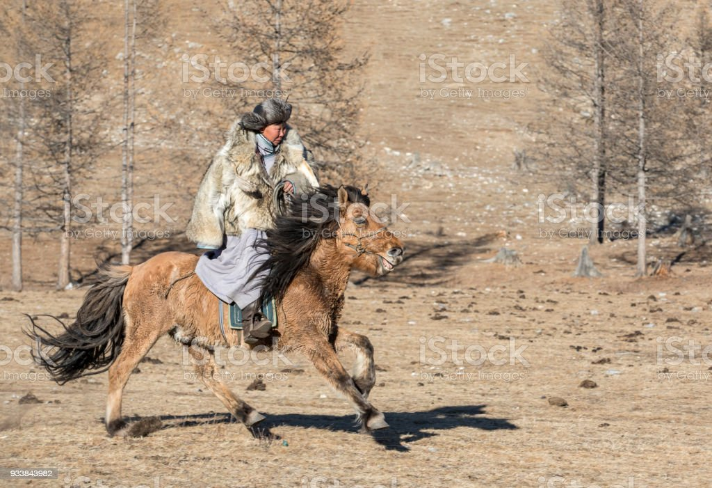 mongolian man wearing a wolf skin jacket, riding his horse in a steppe in Northern Mongolia stock photo