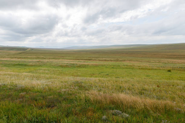 Mongolian steppe on the background of a cloudy sky Mongolian steppe on the background of a cloudy sky, Mongolia beautiful landscape grass area stock pictures, royalty-free photos & images