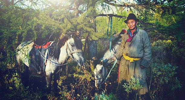 mongolische tsataan pferde ruhigen abgeschiedenheit nomadischen konzept - rawpixel stock-fotos und bilder