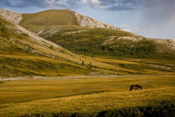 mongolski valley - półpustynny zdjęcia i obrazy z banku zdjęć