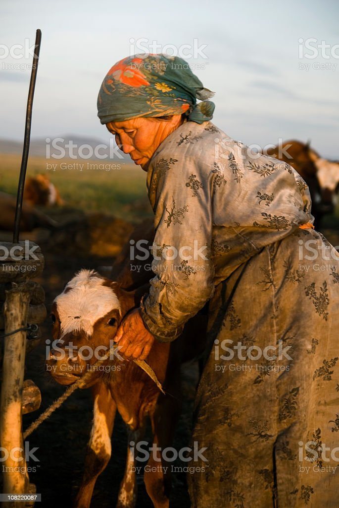 Mongolian Woman with Calf stock photo