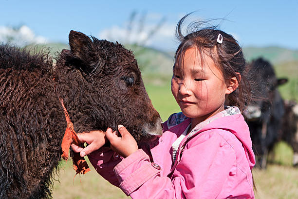 Mongolian young girl playing with yak Mongolian young girl playing with yak, Central Mongolia.http://bem.2be.pl/IS/mongolia_380.jpg mongolian culture stock pictures, royalty-free photos & images