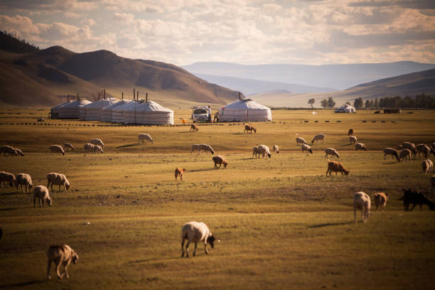 Mongolian yurts on a field Color image of some Mongolian yurts on a field. mongolian culture stock pictures, royalty-free photos & images