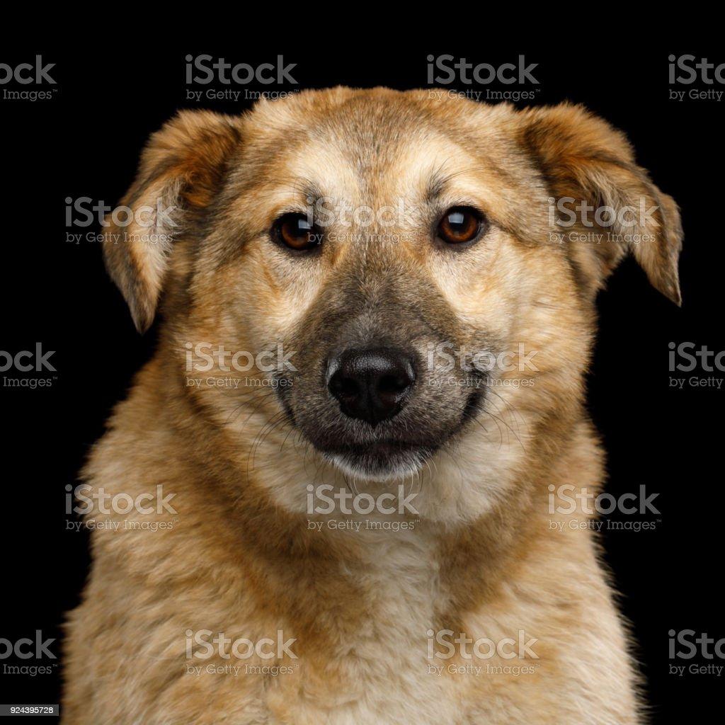 Mongrel Dog Isolated on Black Background stock photo