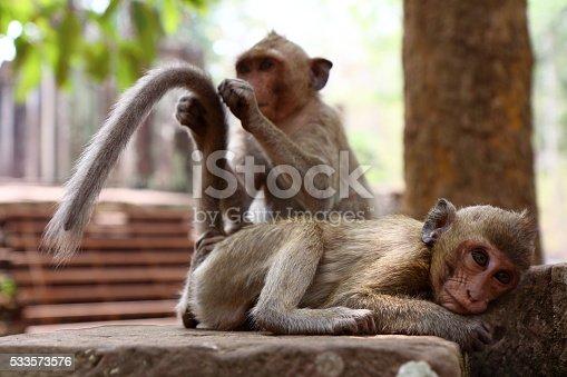 istock Monkey at Angkor site, Cambodia 533573576