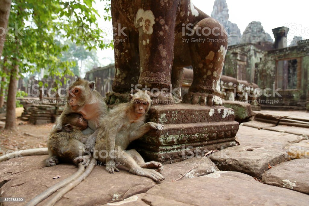 Monkey at Angkor site, Cambodia stock photo